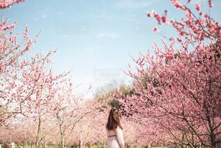 花桃に囲まれての写真・画像素材[4524577]