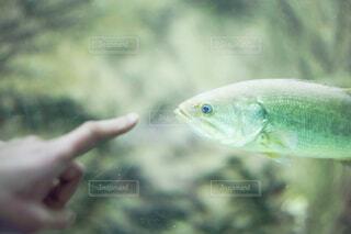 魚の写真・画像素材[4537118]