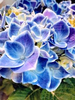 花のクローズアップの写真・画像素材[4525114]