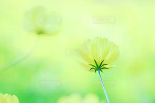 近くの花のアップの写真・画像素材[758108]