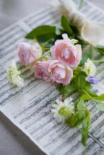 バラの協奏曲の写真・画像素材[2120181]