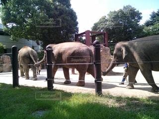 上野動物園の写真・画像素材[594352]