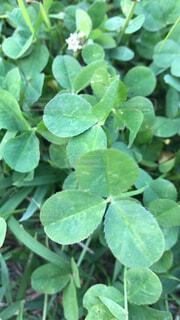 緑の植物のグループの写真・画像素材[4526906]