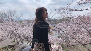 桜とともにの写真・画像素材[2004372]