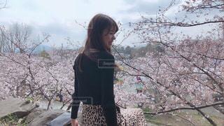 桜とともにの写真・画像素材[2004373]