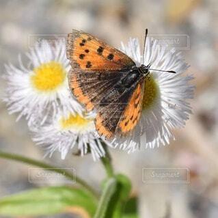 花と蝶の写真・画像素材[4533095]