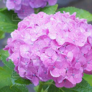 花の写真・画像素材[202517]