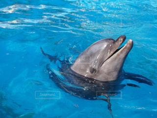 プールのイルカの写真・画像素材[4547317]