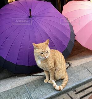 傘屋の看板猫の写真・画像素材[4588577]