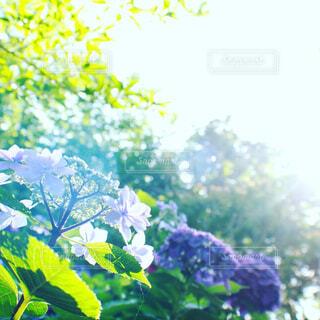 花園のクローズアップの写真・画像素材[4537605]