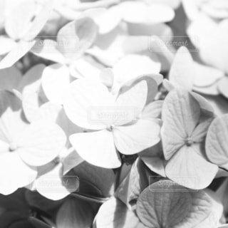 花のクローズアップの写真・画像素材[4537604]