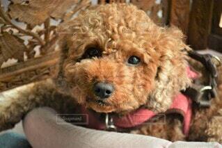 犬のクローズアップの写真・画像素材[4538198]