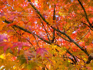紅葉の季節の写真・画像素材[1399022]