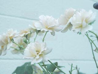 白い花の写真・画像素材[4536558]