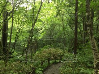森林 - No.199689