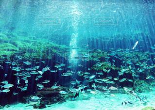 魚の写真・画像素材[227352]