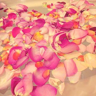 花の写真・画像素材[257315]