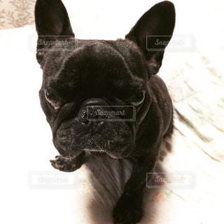 犬の写真・画像素材[284138]