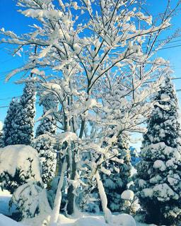 雪景色の庭の写真・画像素材[972591]