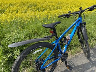 菜の花の前に駐車する青いマウンテンバイクの写真・画像素材[4541114]