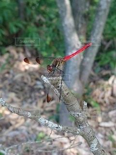蜻蛉のひと休みの写真・画像素材[4681931]