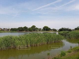 癒しの自然の風景の写真・画像素材[4542316]