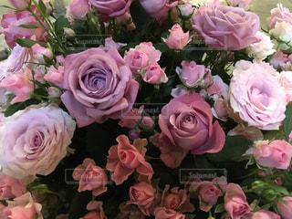 花の写真・画像素材[241551]
