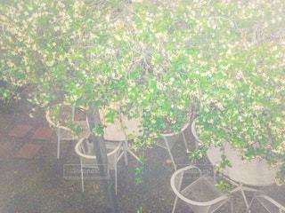カフェの写真・画像素材[556044]