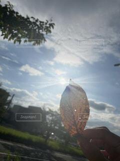 秋を感じたの写真・画像素材[4816850]