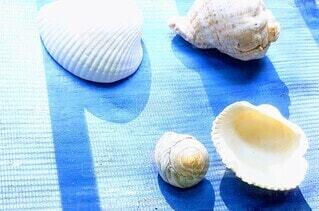 貝殻夏の想い出の写真・画像素材[4566927]