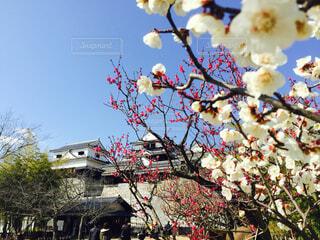 カラフルな花のグループの写真・画像素材[4548139]