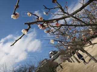 木のクローズアップの写真・画像素材[4548135]