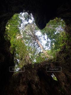 森林の写真・画像素材[208103]