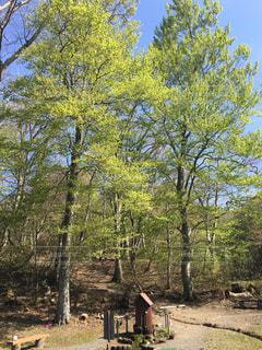 森林の写真・画像素材[208146]