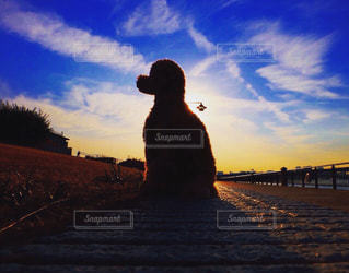 犬の写真・画像素材[691222]