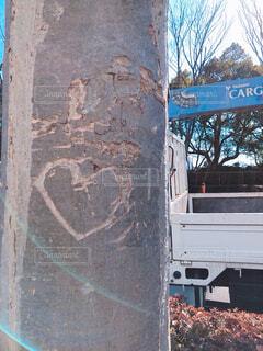 街路樹にハートの写真・画像素材[4552252]