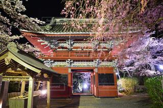 夜桜の写真・画像素材[4553839]
