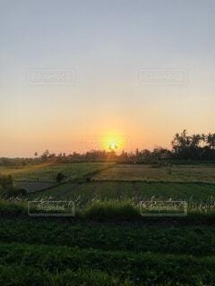 夕日背景の田んぼの風景の写真・画像素材[4731626]