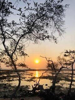 背景に夕陽のある木の写真・画像素材[4769704]