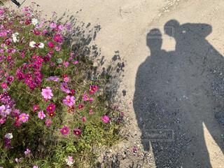 花園のクローズアップの写真・画像素材[4559981]