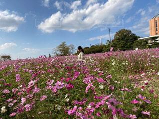 大きな紫色の花が草の中に立っているの写真・画像素材[4559983]