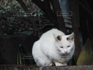 座っている猫の写真・画像素材[4558878]