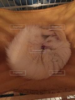 猫の写真・画像素材[16114]