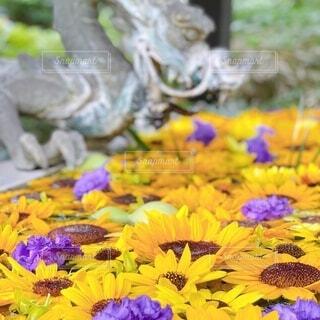 カラフルな花のグループの写真・画像素材[4768307]