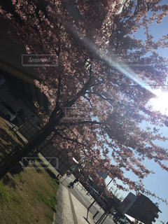 屋外 - No.201206