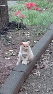 建物の上に座っている猫の写真・画像素材[4563000]