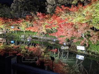 秋っぽいの写真・画像素材[4562598]