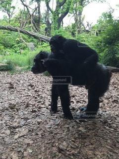 猿の写真・画像素材[19689]