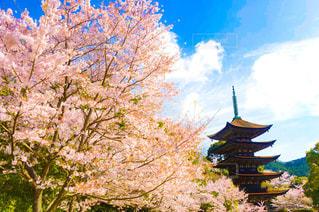 桜 - No.384657