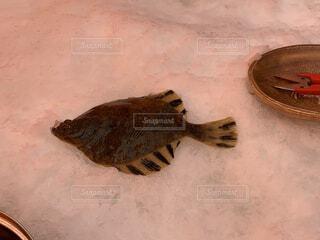 魚の写真・画像素材[4569366]